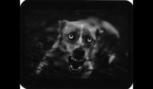 Dog-by-Giacomo-Brunelli-001