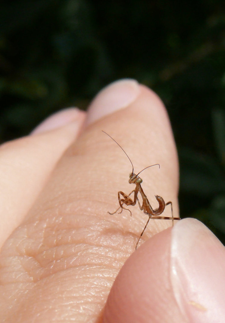 baby insects (18)