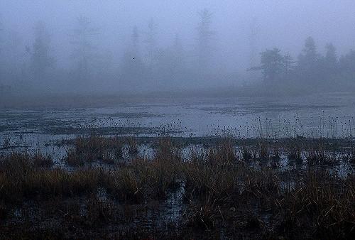 bog-fog